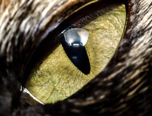 Teste tuburi extensie Micnova MQ-AFN Nikon – MACRO photography